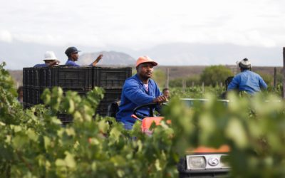 Boplaas harvest 2019